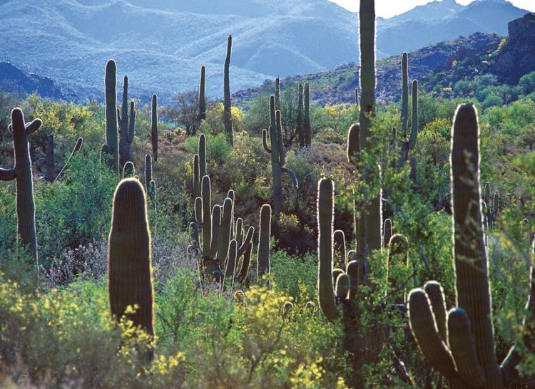 The McDowell Sonoran Preserve in Scottsdale