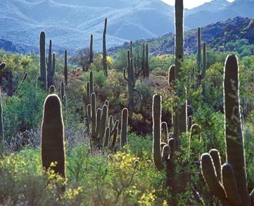 Scottsdale Desert Edge